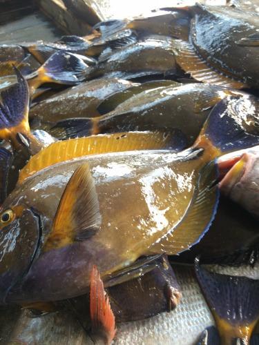 みなさんが乗船する前のお客様たち。捕ったばかりのお魚は絶品だったとのこと!